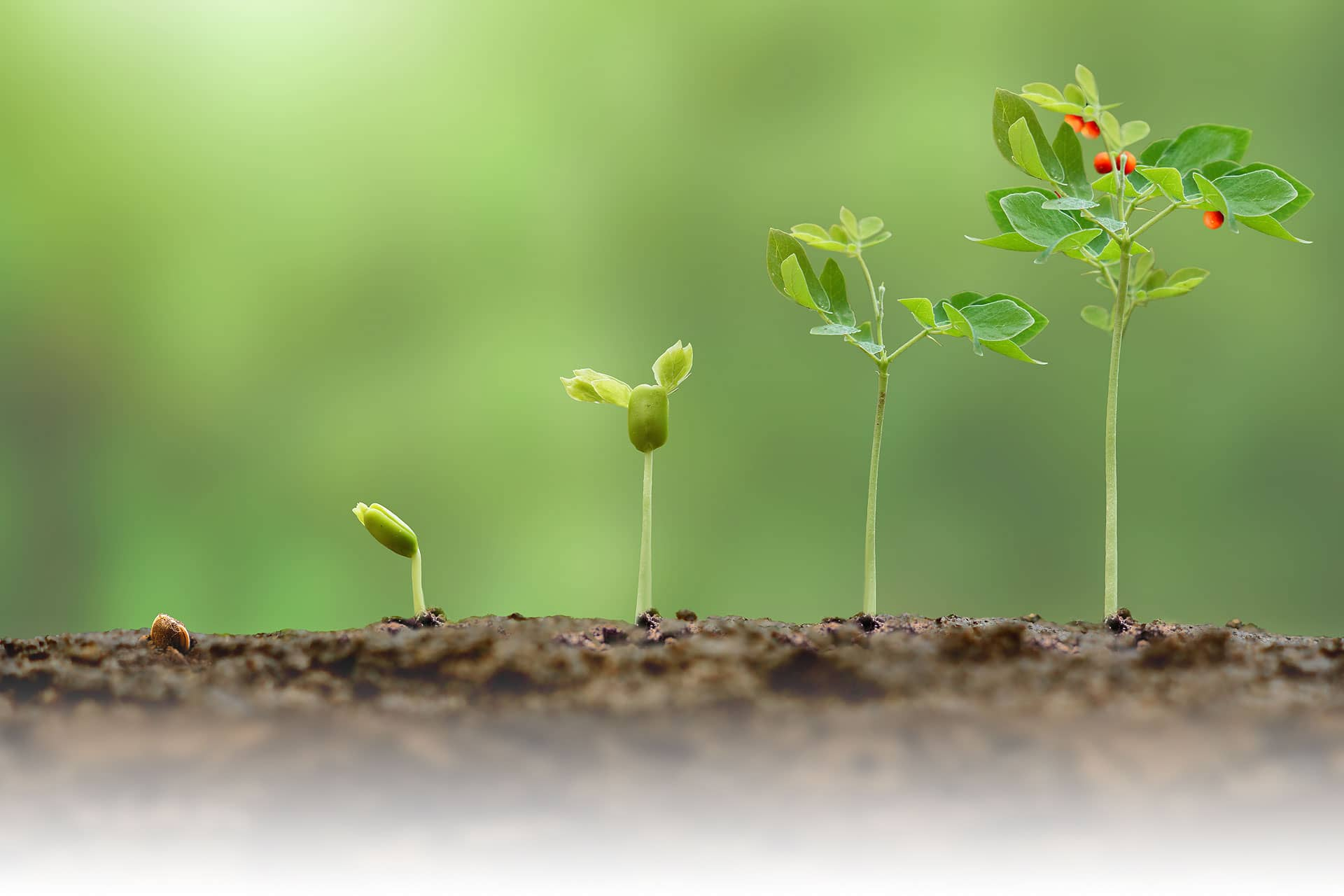 Proceso Crece | Tu proceso