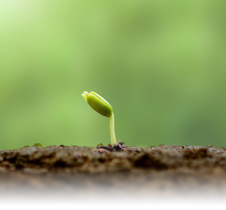 Proceso Crece | Módulo 02 | La Biblia