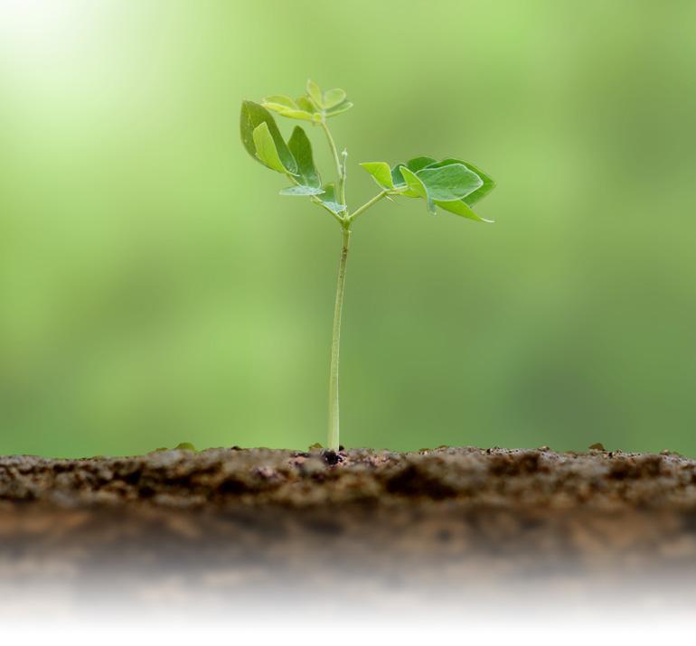 Proceso Crece | Módulo 04 | La Vida Cristiana