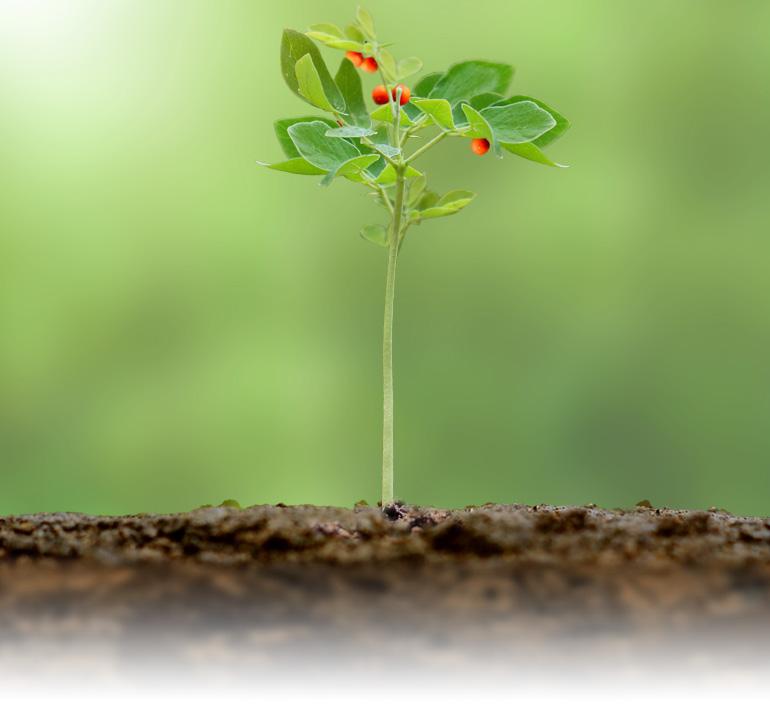 Proceso Crece | Módulo 05 | Mi Misión y Propósito de Vida
